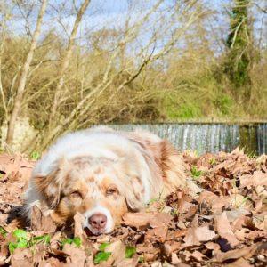 chien qui pose la tête au sol