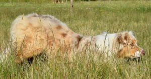 chien calme en maintien de position salut