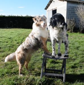 2 chiens sur une chaise