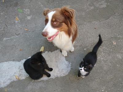 un chien avec ses copains chats