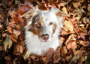 chien dans les feuilles d'automne