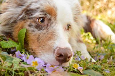 chien tête dans l'herbe