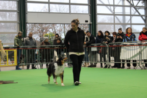 concours de dog dancing
