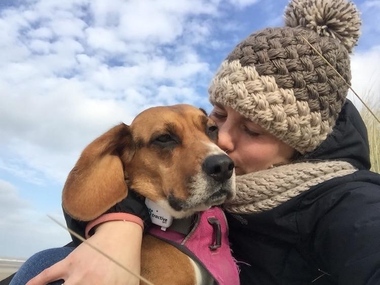 un beagle et sa maitresse