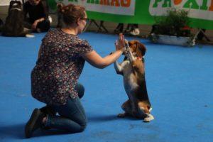 nala concours dog dancing