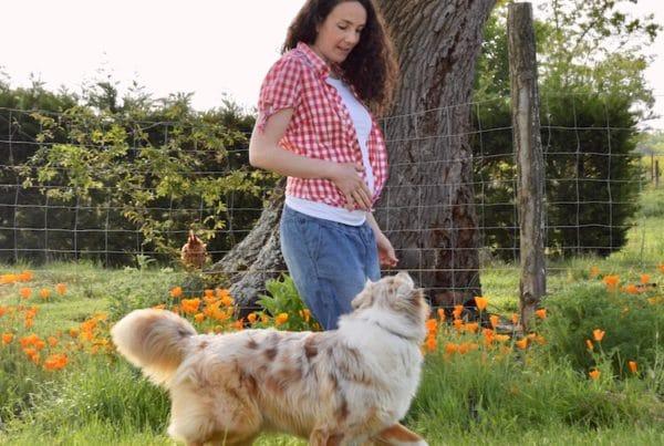 chien marche aux pieds, dog dancing, danse avec ton chien, berger australien, obérythmée