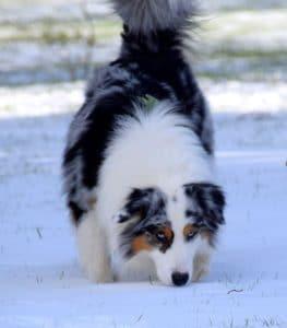 obérythmée dans la neige