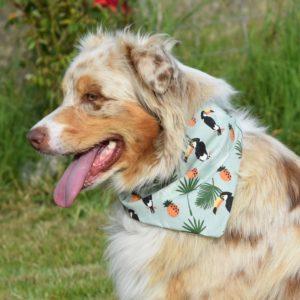 bandana danse avec ton chien, dog dancing