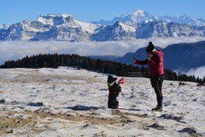 dog dancing montagne border collie