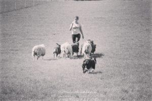 border collie, mouton, troupeau