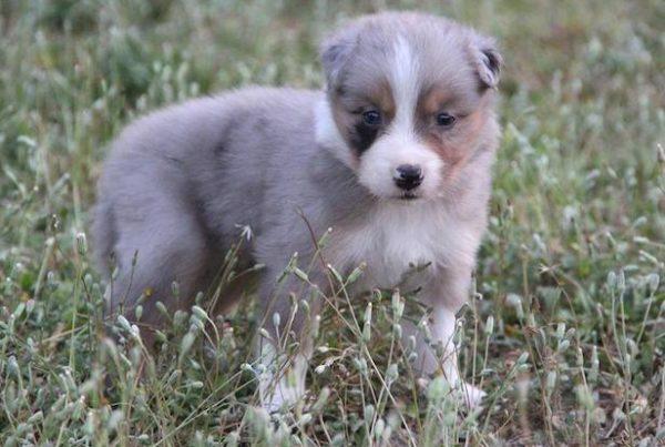 chelsea border collie, dog dancing, éducation positive