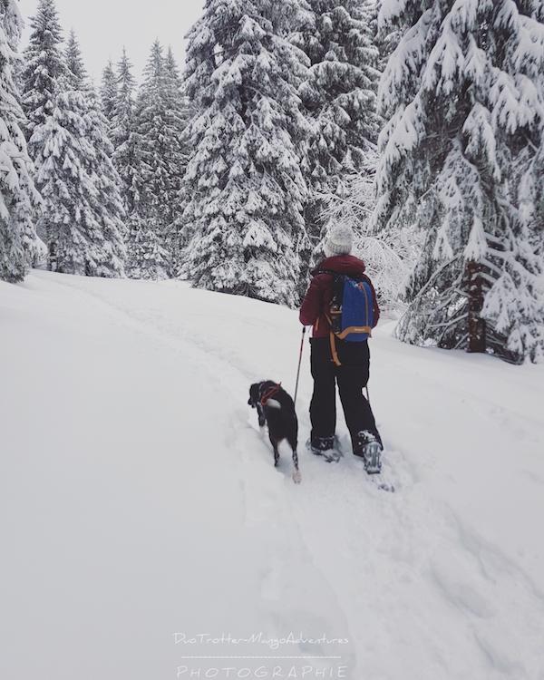 randonnée, neige, border collie