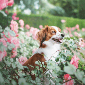 ludie, chien dans les plantes, cynotopia, fitness canin