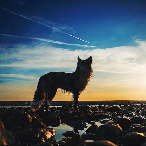 border colie plage, tricks, cynotopia