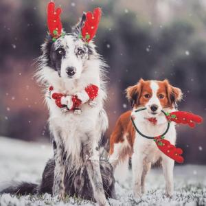 2 chiens déguisés pour noël