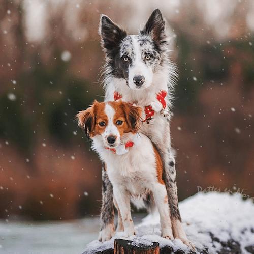Ludie et nyastel, 2 chiens qui dansent et qui posent ensemble