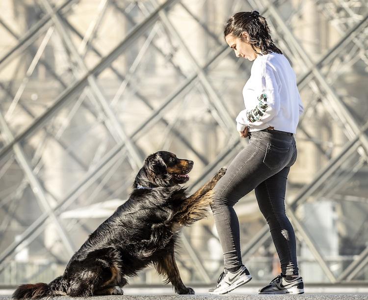 berger australien dog dancing devant le louvre