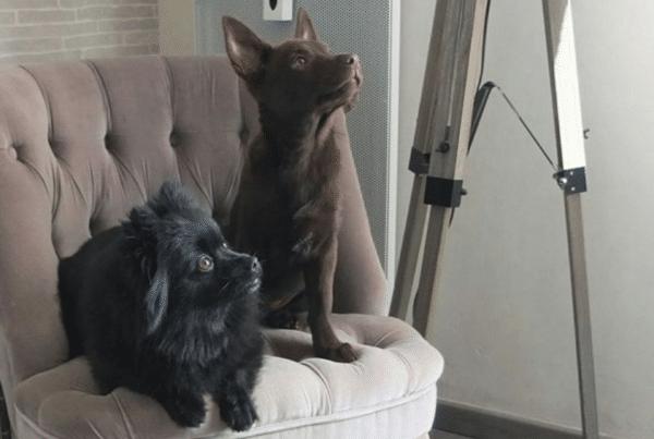 2 chiens dog dancer