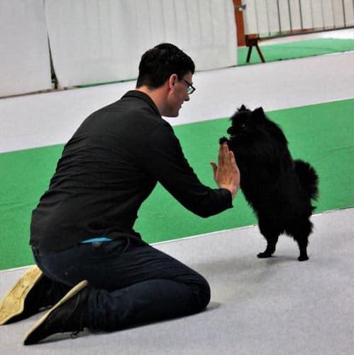 jonathan et Inna a un concours de dog dancing