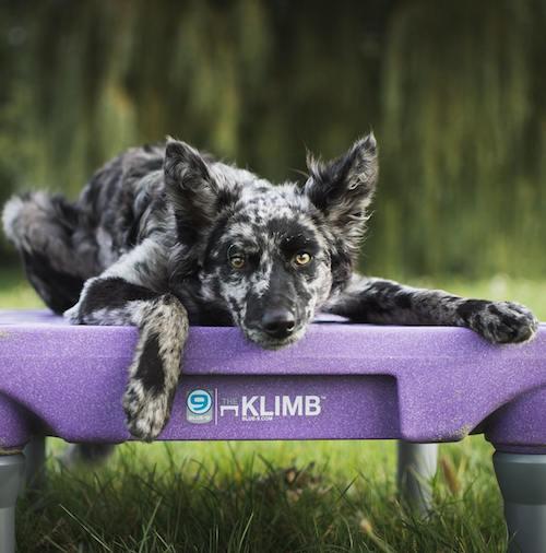 bodza sur une table d'agility