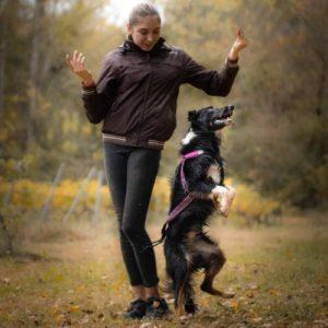 bordercollie aika dog dancing tricks
