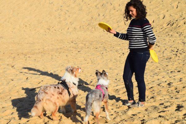 Juliette Boidin joue au frisbee avec 2 chiens