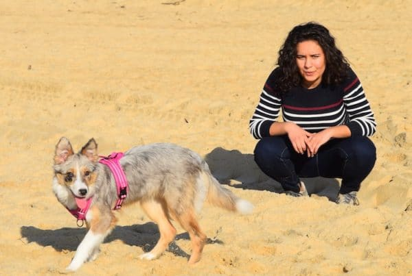 bordercollie vigilant sur la plage
