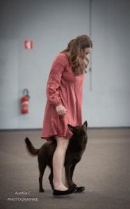 kelpie entre les jambes de sa maitresse durant un concours de dog dancing