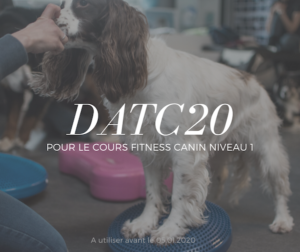 CODE PROMO COURS EN LIGNE FITNESS CANIN NIVEAU 1 CYNOTOPIA