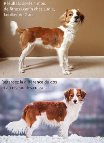 Ludie de cynotopia après de 2 mois de fitness canin