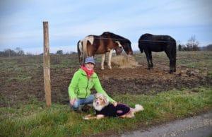 traviller le calme du chien auprès des chevaux