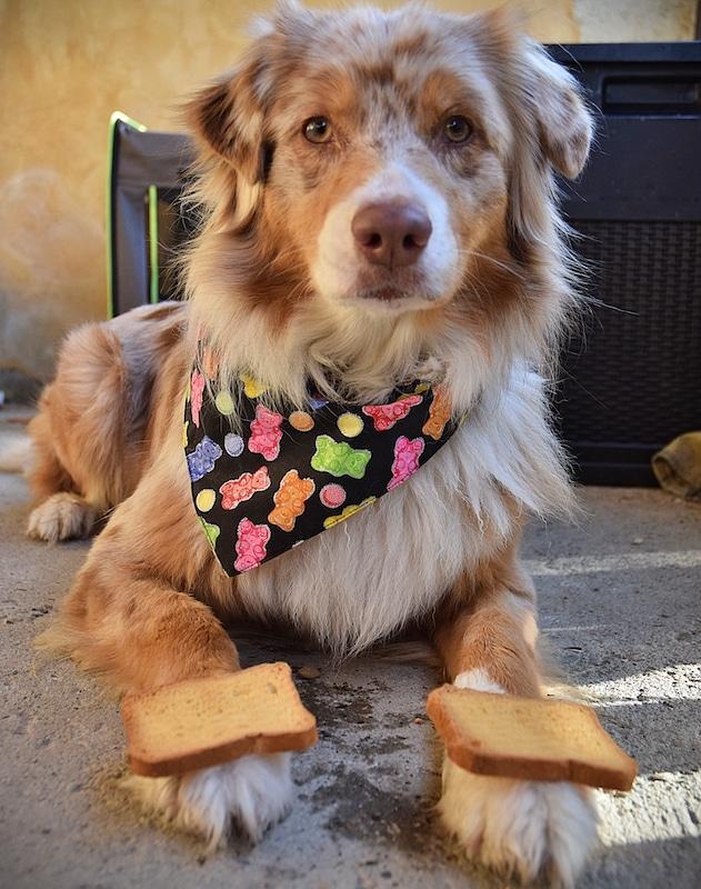 biscotte chien étape3