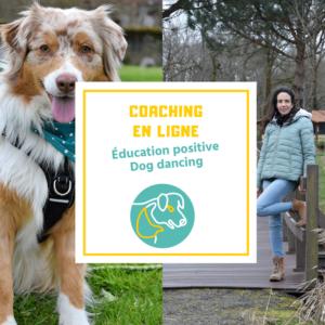 Coaching en ligne personnalisé éducation positive et dog dancing