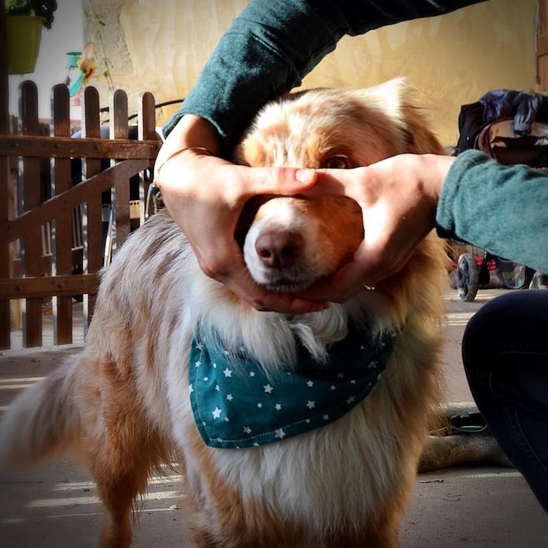 nez chien dans le rond des mains