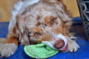 Apprendre au chien à ranger ses jouets