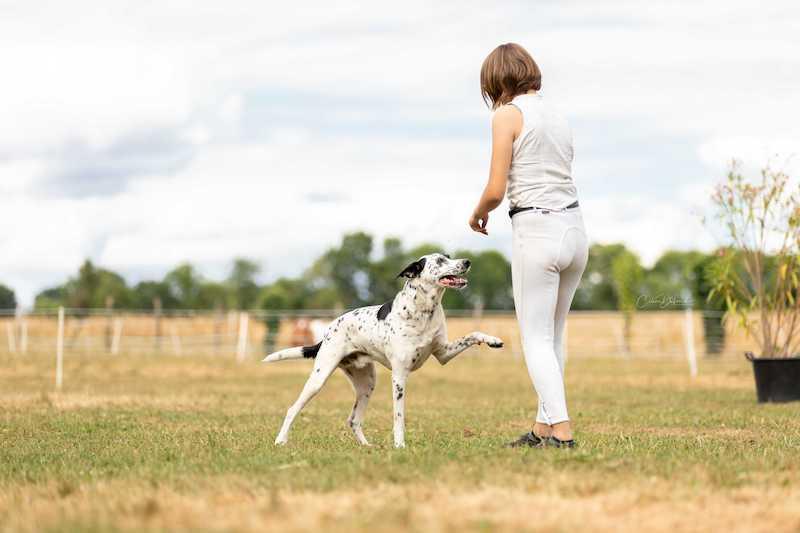 Apprendre le pas espagnol à son chien