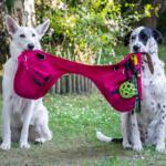 ceinture rose éduc+ chiens chevaux