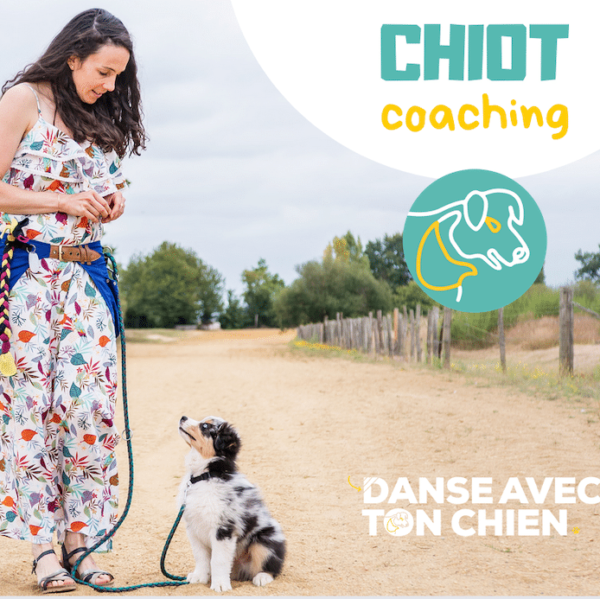 coaching chiot