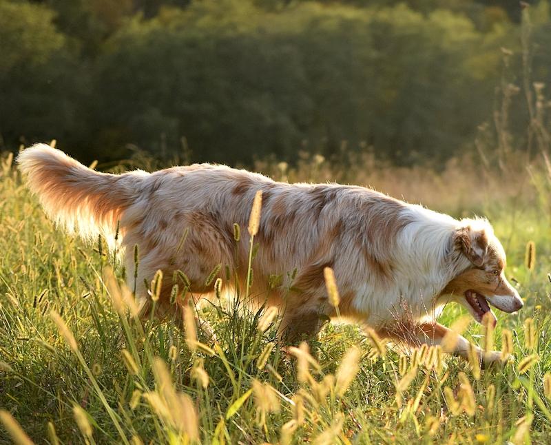 La belle gipsy de danse avec ton chien