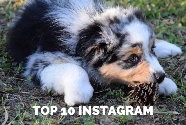 article du top 10 insta
