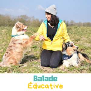 balade éducative canine dans les landes