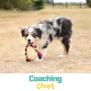 Coaching chiot éducation positive