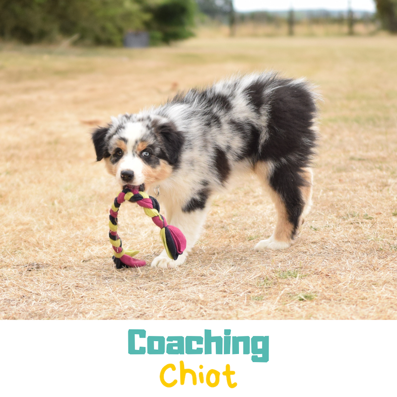 Coaching chiot éducation positive