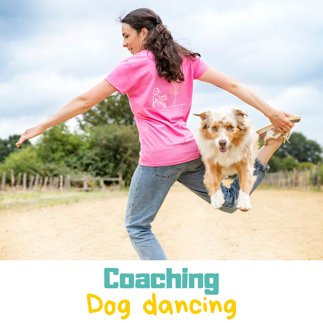 Coaching de dogdancing
